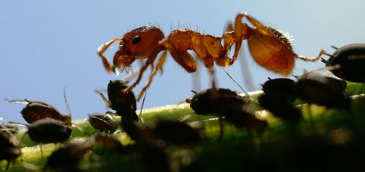 insetti autunno