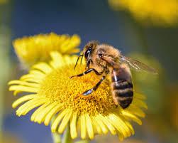 Come comportarsi nel caso di punture di api o di vespe