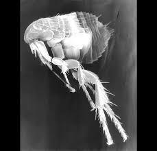 Come riconoscere le punture di quale insetto sono