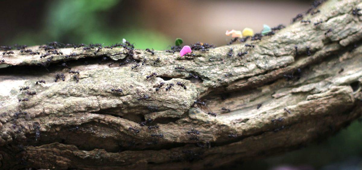Cosa non fare in caso di invasione di formiche