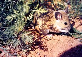 serie di danni materiali che i topi possono causare