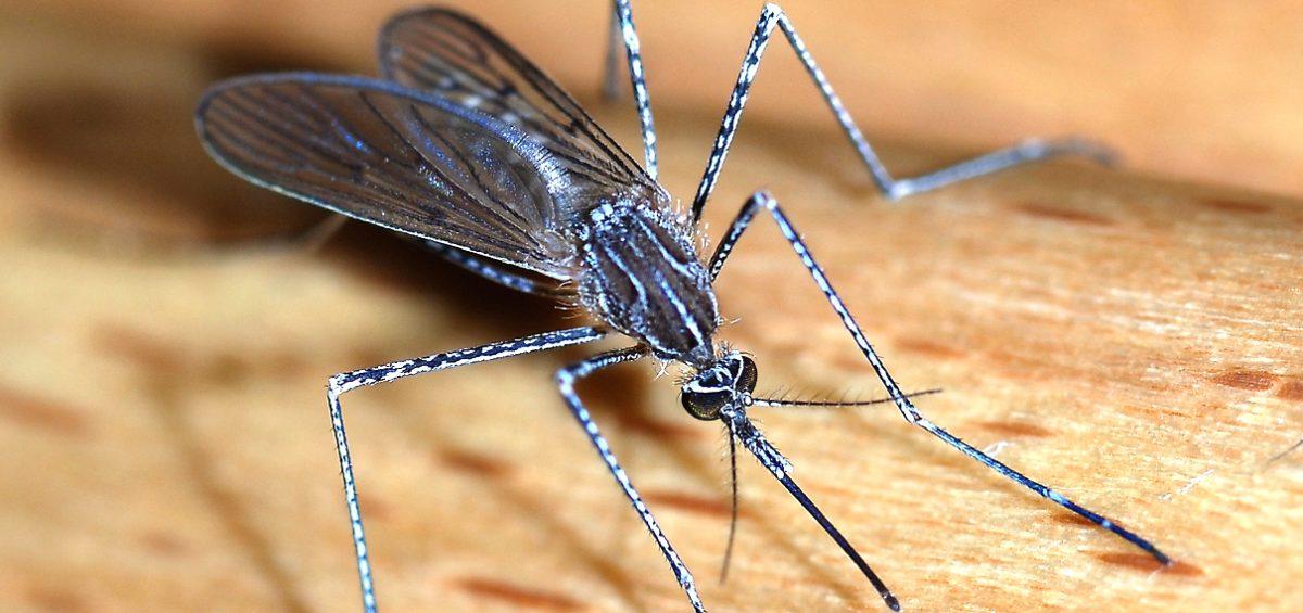 Che fine fanno le zanzare d'inverno