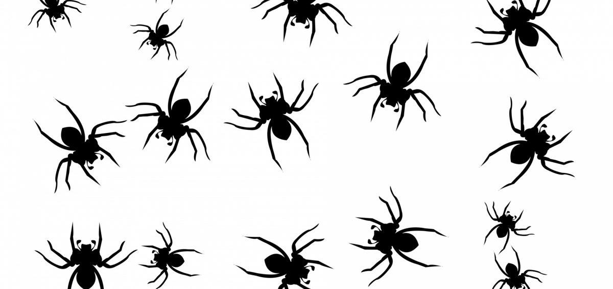 La paura dei ragni